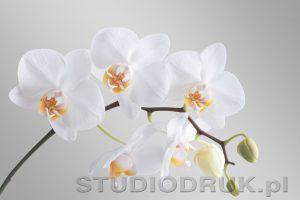 kwiaty 018