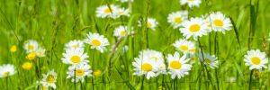 kwiaty 023