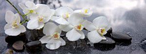 kwiaty 024