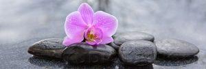 kwiaty 026