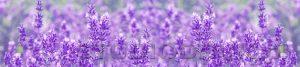 kwiaty 028