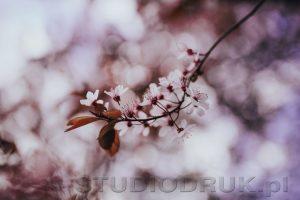 kwiaty 036