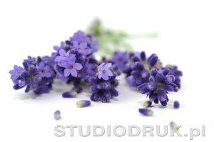 kwiaty 037