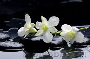 kwiaty 039