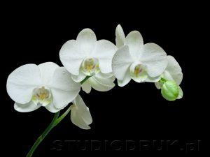 kwiaty 047