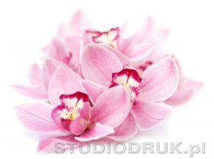 kwiaty 050