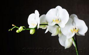 kwiaty 052