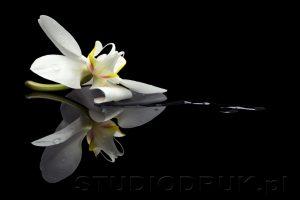 kwiaty 053