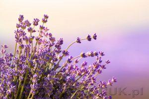 kwiaty 055