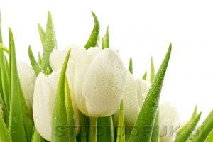 kwiaty 058