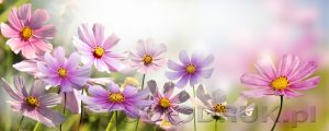 kwiaty 060