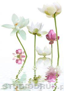 kwiaty 063