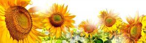 kwiaty 064