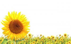 kwiaty 065
