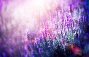 kwiaty 069