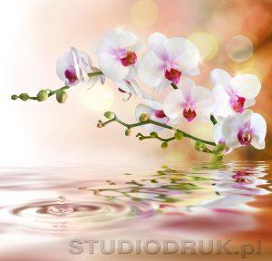 kwiaty 070