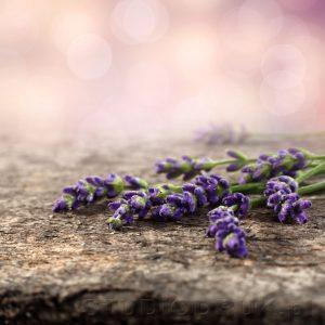 kwiaty 071