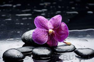 kwiaty 076