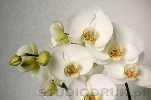kwiaty 079