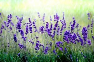 kwiaty 080