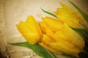 kwiaty 081