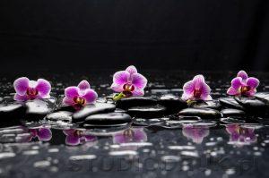 kwiaty 085