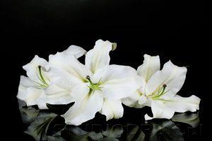 kwiaty 091