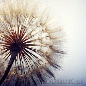 kwiaty 096