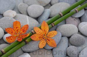 kwiaty 097