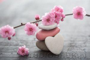 kwiaty 098
