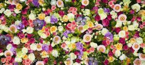 kwiaty 103