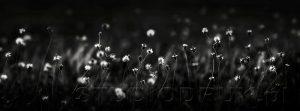 kwiaty 116