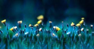 kwiaty 120