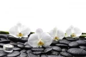 kwiaty 122