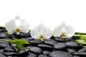 kwiaty 123