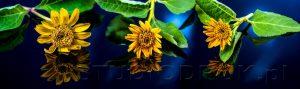 kwiaty 135