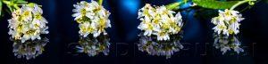 kwiaty 137