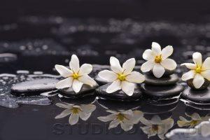 kwiaty 146