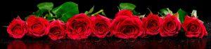 kwiaty 149