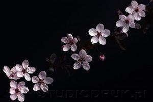 kwiaty 154