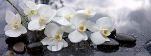 kwiaty 165