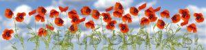 kwiaty 168