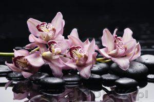 kwiaty 173