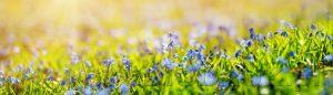 kwiaty 178