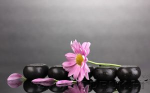 kwiaty 184
