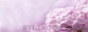 kwiaty 191