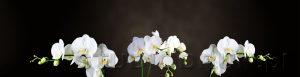 kwiaty 193