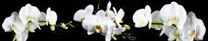 kwiaty 198