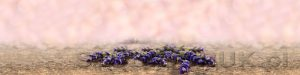 kwiaty 201