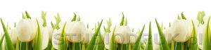 kwiaty 211